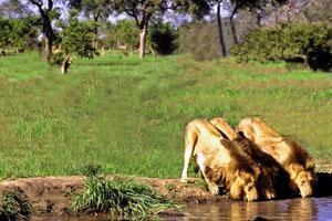 Natal Lion Park