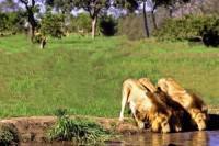 Natal Lion Park, Camperdown, Natal Midlands, KwaZulu-Natal