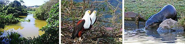 Umbogavango Nature Reserve, South Coast, KwaZulu-Natal