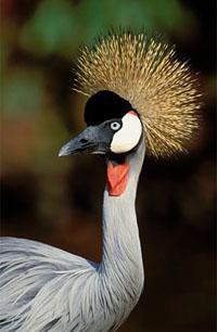 Amanzimtoti Bird Sanctuary, South Coast, KwaZulu-Natal