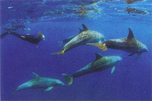 At Rocktail Bay, divers sometimes encounter pods of dolphins.