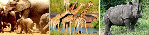 Hluhluwe-iMfolozi Game Reserve, Zululand