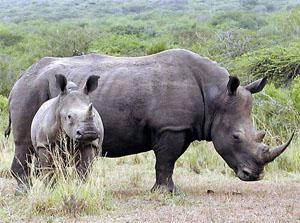 Hluhluwe-iMfolozi Game Reserve, Zululand, KwaZulu-Natal