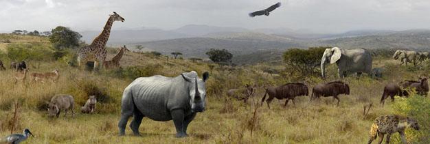 Hluhluwe, Zululand