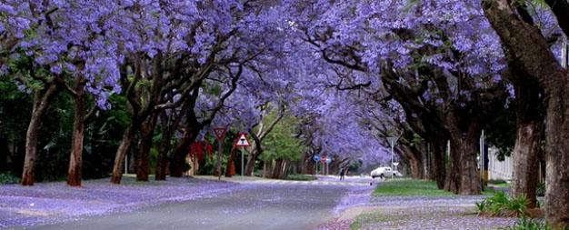 Johannesburg Villages are set amidst beautiful trees