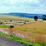 The pretty countryside around Lindley in the Eastern Free State, South Africa