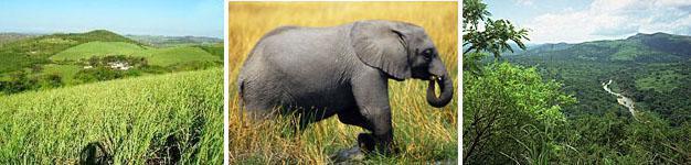 Mtubatuba, Elephant Coast, KwaZulu-Natal