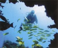 Rocktail Bay offers a memorable' scuba diving experience.