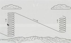 Vultures cover distances in search of food by repeatedly gaining height in one thermal and gliding downward in the desired direction to the next. A thermal can often be identified by the cumulus cloud above it.