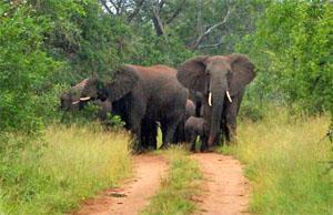 uMkhuze Game Reserve, Zululand, KwaZulu-Natal
