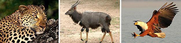 uMkhuze Game Reserve, Zululand