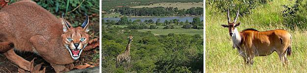 Utrecht Balele, Community Game Park, Battlefields, KwaZulu-Natal