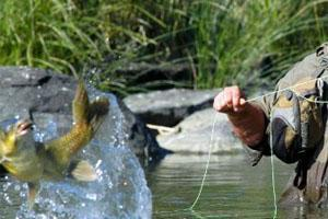 Catch and Release Fly Fishing at Wag n Bietjie Eco Farm, South Africa