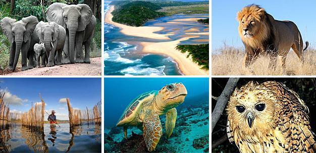 Elephant Coast, KwaZulu-Natal