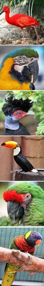 Montecasnio Bird Gardens