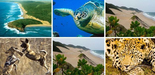 Maputaland - biodiversity hotspot