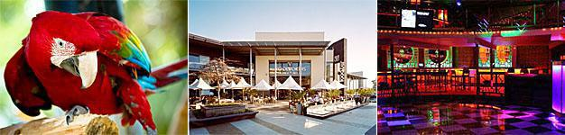 Montecasino Bird Garden, Design Quarter and Nightclub in Fourways