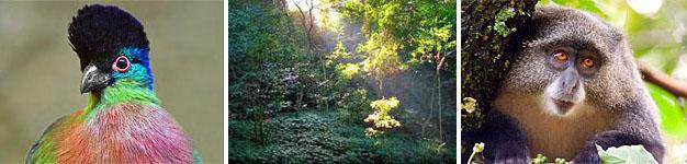 Ntendeka Wilderness Area, Ngome State Forest, Zululand