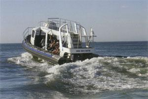 The Whale Whisperer, Dyer Island Cruises' custom-built whale-watchinq boat, gets close to the ocean-going behemoths without compromising the safety or comfort of its passengers - and the whales.
