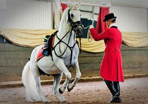 South African Lipizzaners