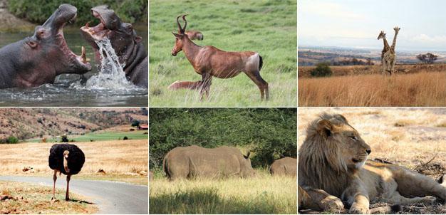 Krugersdorp Game Reserve, West Rand, Gauteng