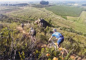 The majority of the singletrack is technical but still rideable for all but the most inexperienced, or cautious, riders.