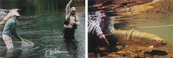 1. Tony helps land Mario's yellowfish at the weir. 2. Releasing a typical Sterkspruit rainbow trout.