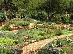 Walter Sizulu botanical gardens, Roodepoort