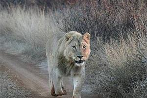 South African Wild Life Parks