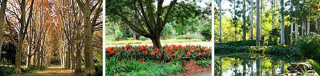 Pietermaritzburg Botanical Gardens, Natal Midlands