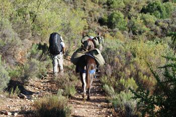 On the Donkey Trail in Swartberg Nature Reserve, guests hike to a remote mountain camp while donkeys transport their gear.