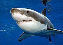 Natal Sharks Board, Umhlanga, eThekwini