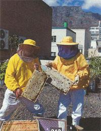 Beekeeping for Profit and Pleasure, CapeTown