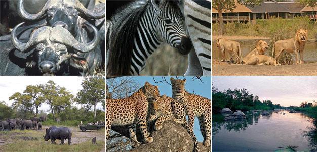 Sabi Sands Game Reserve, Mpumalanga
