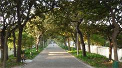 The Company Gardens, Cape Town