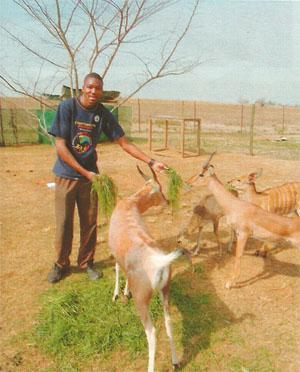 Animal rehabilitation assistant at FreeMe, Israel Silevu, with some very grateful antelopes. Israel is studying to be a vet