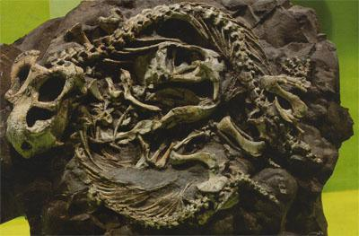 Fossilised skeletons of two juvenile Diictodon mammal-like reptiles that crawled into an underground burrow and curled up together probably to conserve heat. In all likelihood, a sudden flood or a roof collapse buried them before they could escape.