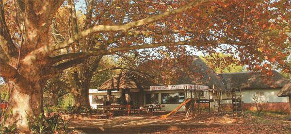 The much-loved The Falls Rest restaurant at Howick Falls is famous for its milkshakes. In autum it is covered in amber.