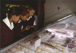 Visiting the museum during the week is an uplifting experience. School kids are everywhere and the place buzzes as youngsters, many of whom have never experienced anything like the Iziko South African Museum, gasp in awe at the exhibits. These kids were amused by the rat exhibition curated by Fritha Langerman.