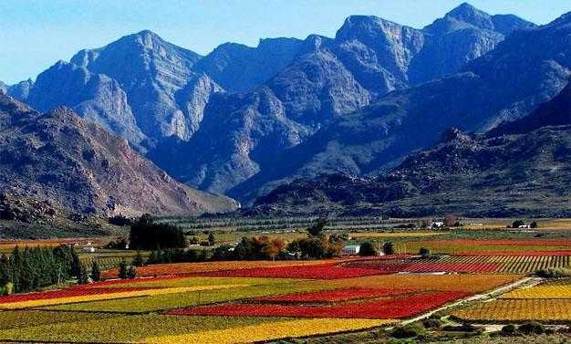 Autumn Colours in the Western Cape