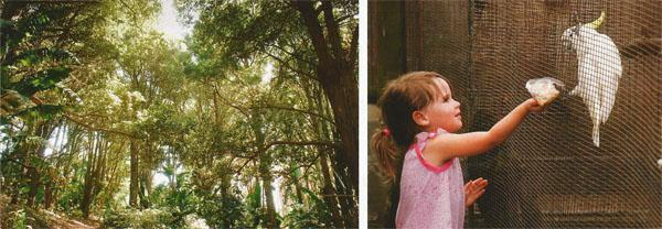 Hike the circular trail in Skyline Nature Reserve or enjoy picnics under the high-rise forest canopy. ABOVE RIGHT: The Uvongo Bird Park is favourite stop for families and bird lovers. Kids can feed some of the birds with seeds bought from the park's tea garden.