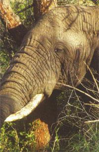 The safari includes game drives in the Hluhluwe-lmfolozi Park and the Kruger.