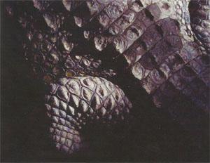 The trip includes a visit to a crocodile sanctuary for those brave enough