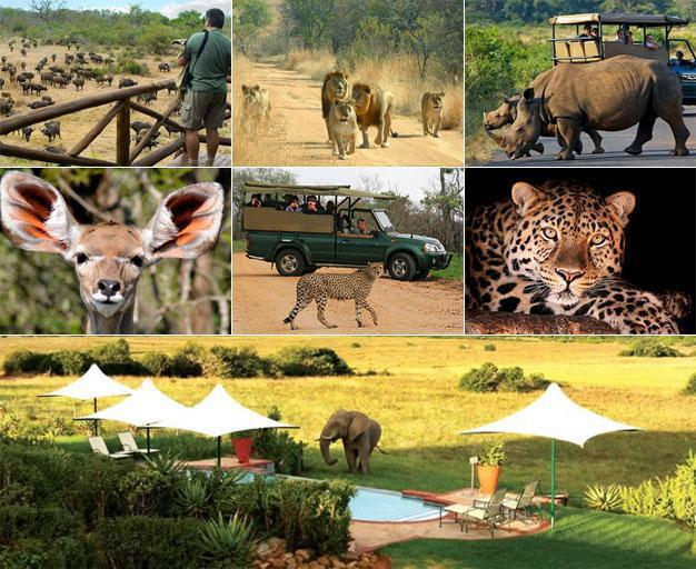 South African Safaris