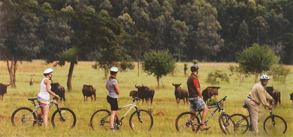 A guided mountain bike trail is a fun way to explore