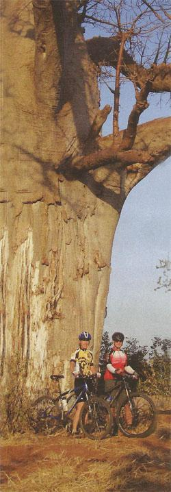 Baobab trees offer little shade, but make the riding here special.