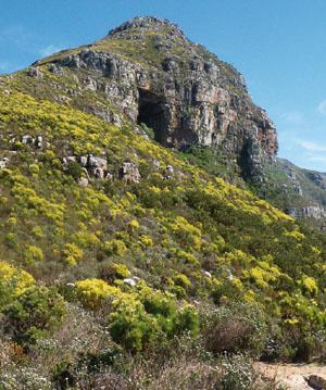 The two-hour hike to Elephant's Eye Cave in the Silvermine section of the park has all the ingredients for a fun day out.
