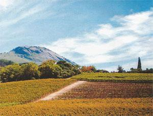he town of Paarl is surrounded by lush vineyards.