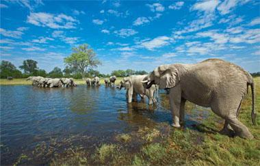 In northern Botswana, scenic beauty and an abundance of wildlife make the region perfect for photographic tourism. In parts of Africa without this fortunate combination, trophy hunting could be an alternative to unsustainable agricultural land use.