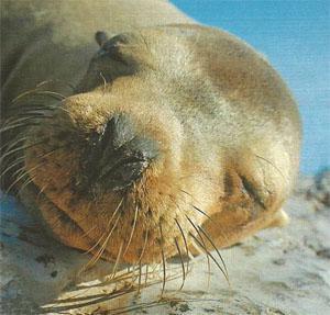 Seals: a shark's best friend.